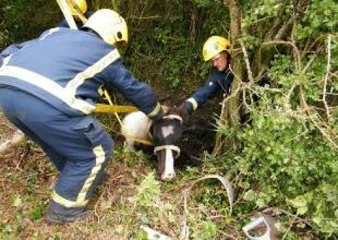 UK Firefighters Use HIAB Cranes for Animal Rescue