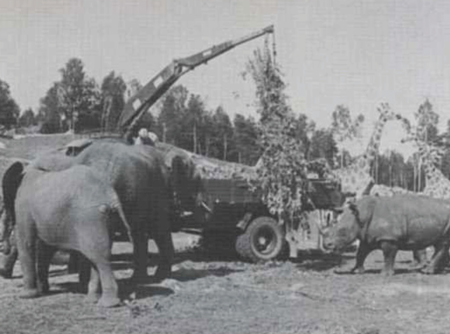 HIAB 174 Speedloader was Also an Elephant Feeder